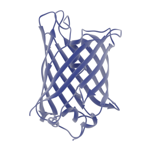 Reporter Proteins