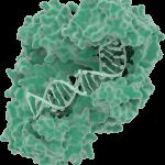 GGreen Reverse Transcriptase