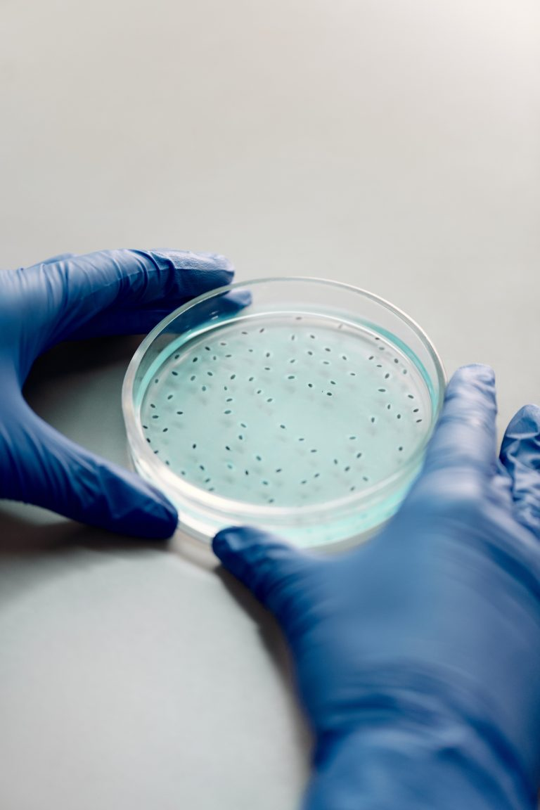 Bacteria on a petri dish
